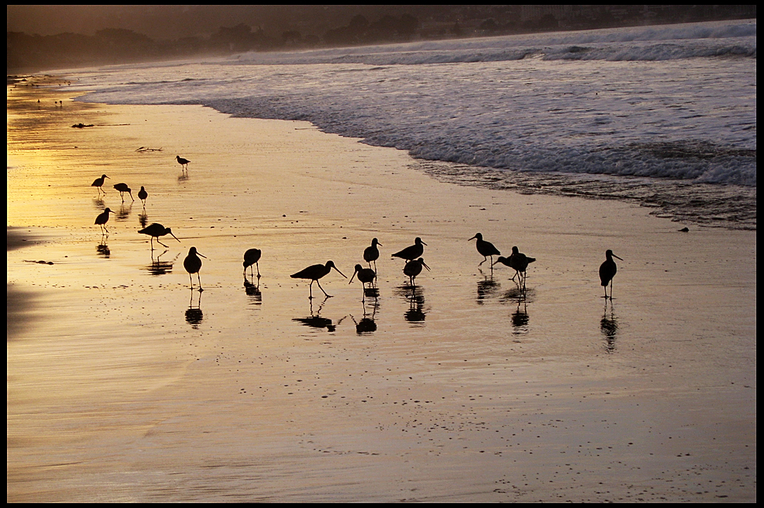 birds-on-the-beach-monterey-ca-december-2007