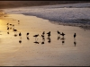 birds-on-the-beach-monterey-ca-december-2007